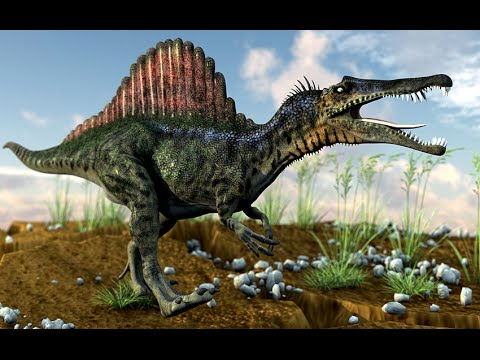 Water-living Spinosaurus dinosaur discovered