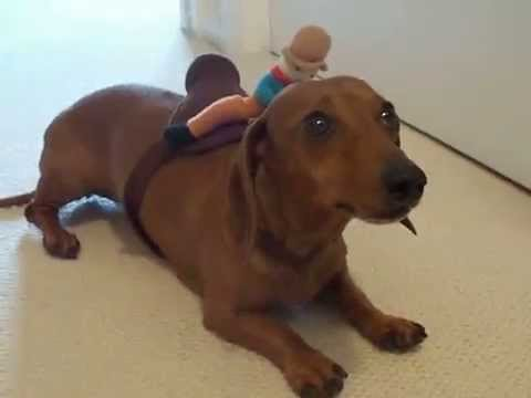 Where Can I Fine A Wiener Dog