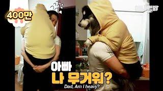 (응..) ㅣ My Son Is An Extremely Obese Malamute Dog