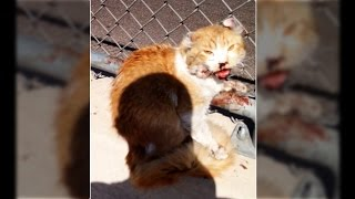 'Freeway' the cat saved by a good samaritan; Good guy with a gun stops carjacker - Compilation
