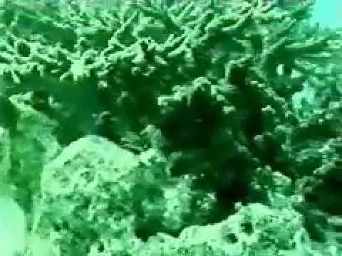 Scuba Diving in the Persian Gulf Kish Island of Iran