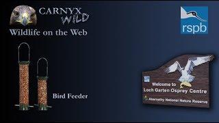 Bird and Squirrel Feeder Live from Loch Garten