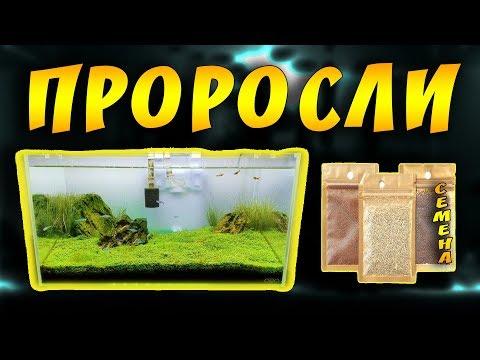 Семена аквариумных растений с Алиэкспресс! Семена растений с алиэкспресс отзывы!