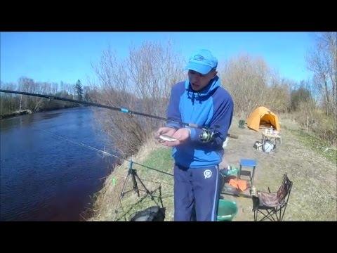 рыбалка бери  реке луга в налима