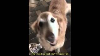 hot  sex Dogs vs women