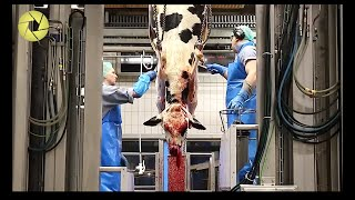 Inside The Meat Processing Plant - Inside The Food Factory | Incredible Process Worth Watching HD