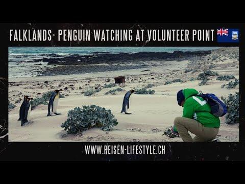 Wow! Pinguine Falkland Inseln, Reisen & Lifestyle, Barbara Blunschi