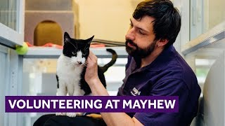 Volunteering with Dogs and Cats | Mayhew