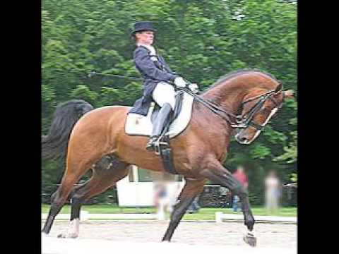Horses – Dressage; abuse in some cases