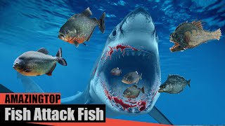 Top 10 Amazing Fishing Fails Catch Fish Attack Fish