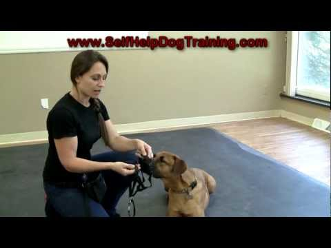 Dog Training With A Halti Collar - Intro (k9-1) video