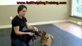 Dog Training with a Halti Collar - Intro (www.K9-1.com)