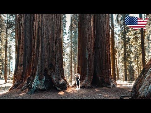 Gigantische MAMMUTBÄUME & der Yosemite Nationalpark ∙ USA Roadtrip ∙ Weltreise Vlog #84