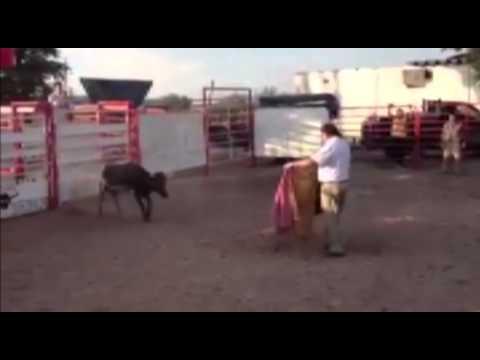 Afanes toreros del Alcalde terminan en vapuleada