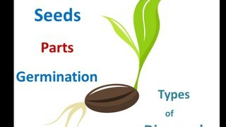 papaya tree planting instructions