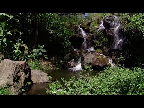 La Sexta Extinción (documental completo)