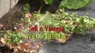Salt n vinegar Weed Killer how to and TEST
