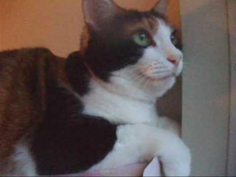 忙しそうにしゃべる猫 - Cat talks busily.