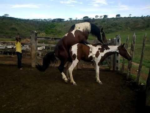 Cobertura cavalos pampa-Haras J. PIRES