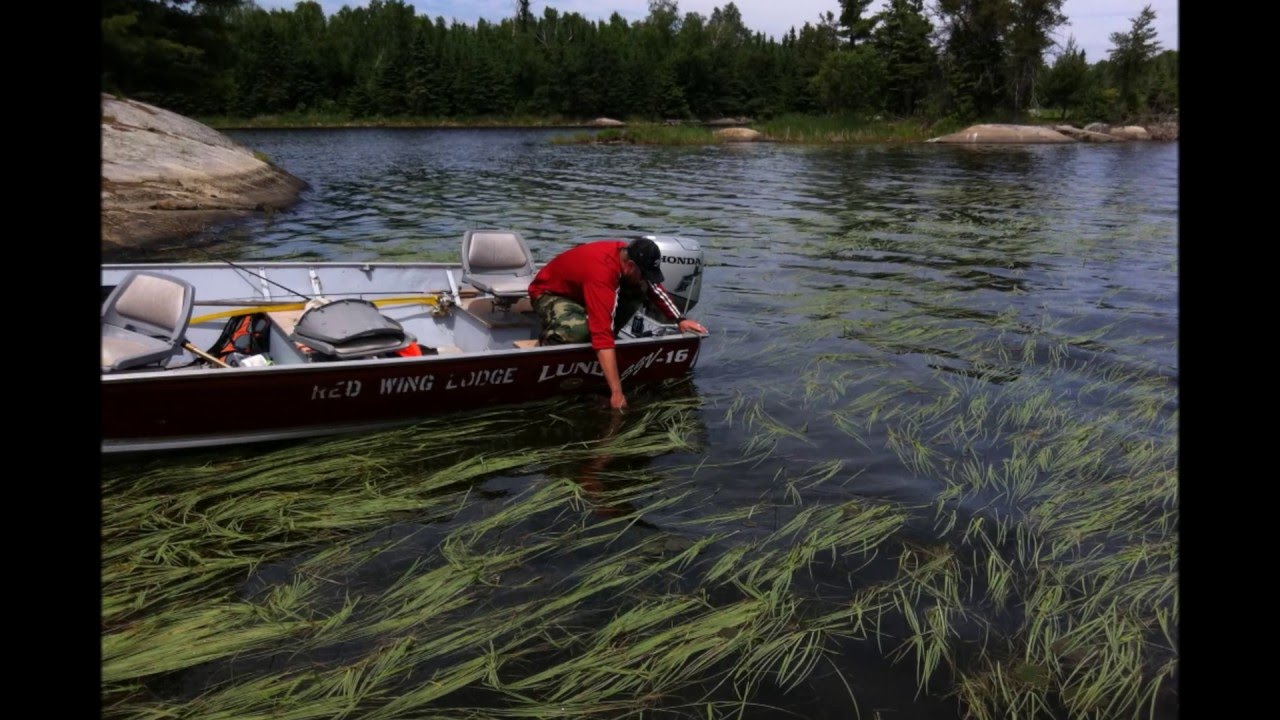 Red wing lodge morson ontario benda family fishing for Red wing fishing report