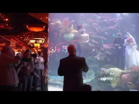 Underwater Wedding in Giant Aquarium at Silverton Casino, Las Vegas, NV