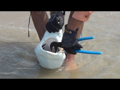 BlackTip Shark Fishing, What We Do For One Shark 1/4