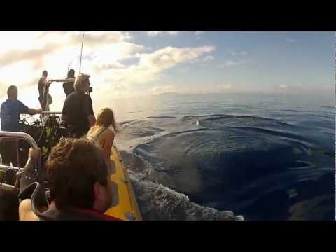 GOPRO HD2-Dolphins swimming alongside the boat when we went to Dive @ madeira