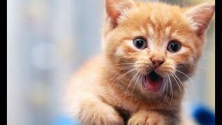 2015 Funny Video Funny Cats Funny Dog Funny Animal