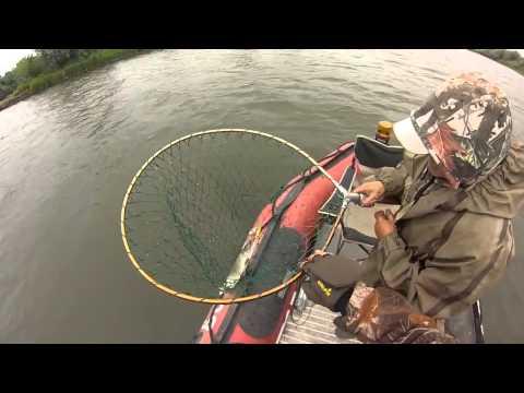 многих рыболовов, нерест чехони на ладоге белье постепенно