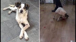 Segurança de supermercado mata cachorro a pauladas e gera protestos