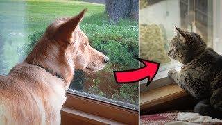 Dieser Hund starrt jeden Tag aus dem Fenster, der Grund ist unglaublich
