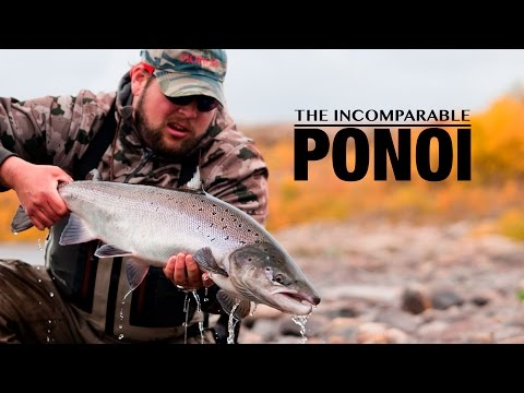 The Incomparable Ponoi - Atlantic Salmon - Fly Fishing by Gin-Clear Media
