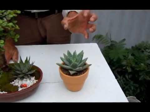Plantas para la buena suerte 3 youtube for Como se llaman las plantas ornamentales