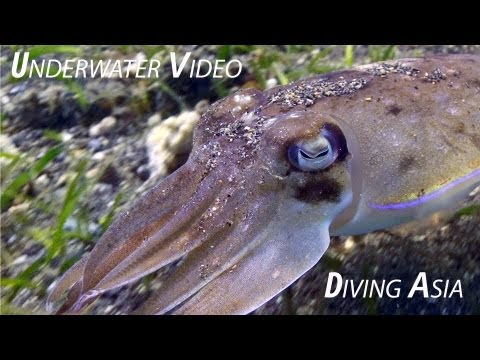 download lagu Liquid Media`s Underwater Love -   Diving In gratis
