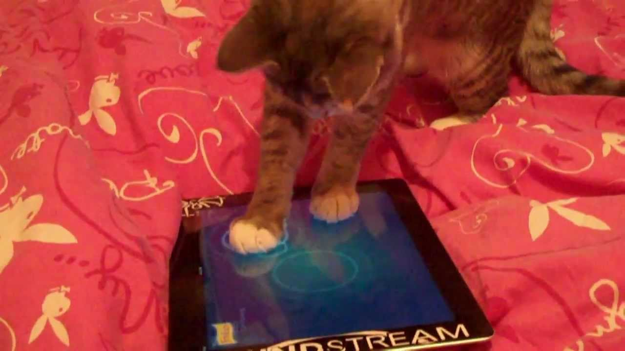 Crazy cat playing ipad 2 jitter bug cat fishing game for Fish game for cats