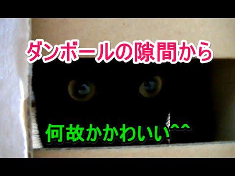 猫がダンボールに入ると何故かかわいい^^