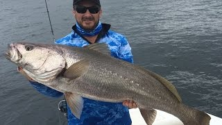 Spring Jewfish on the GC