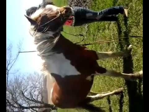 Sexy Girl With A Horse video