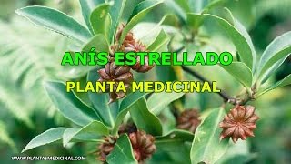 Anís Estrellado - Propiedades y Beneficios Medicinales