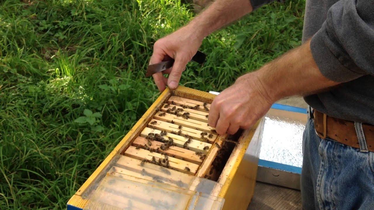 Нуклеусы для пчел своими руками видео