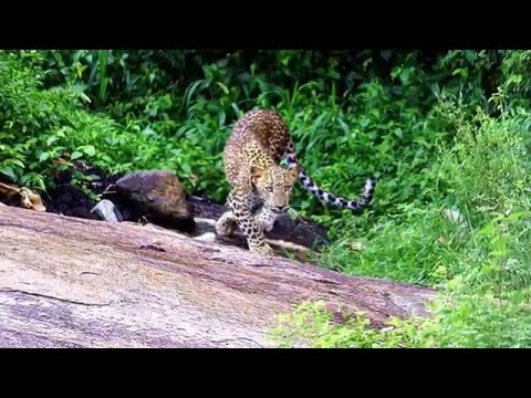 YALA National Park Sri Lanka SAFARI Photo-Video Show