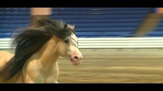 2012 Feathered Horse Classic - At Liberty - Taskin