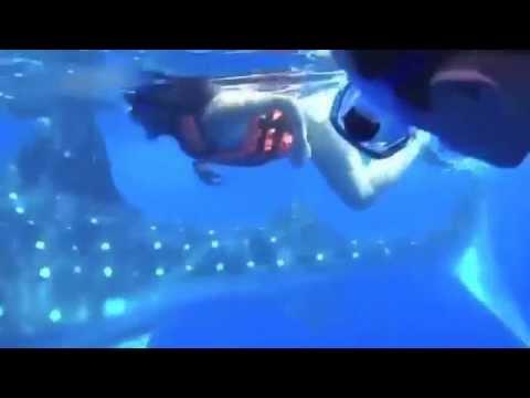 Tubarão Baleia Cancun Whale Shark