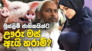 Why Do Muslims Not Eat Pork