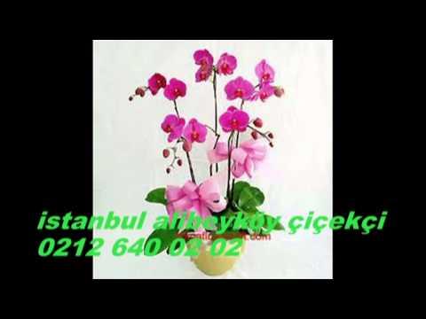 istanbul alibeyköy çiçekçi
