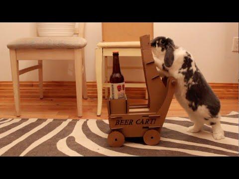Conejo lleva cerveza a su dueño