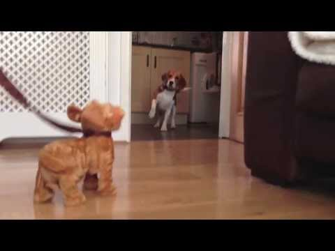 Craig the Beagle - A Series of Random Events