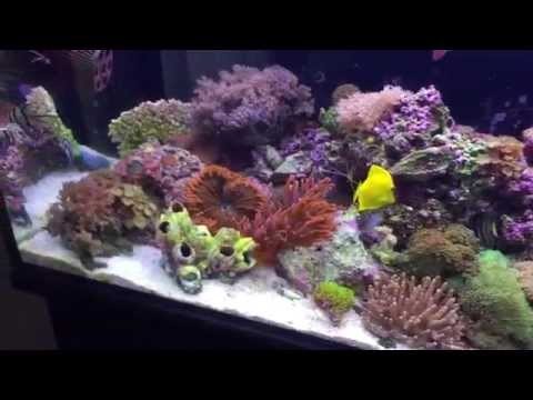 Innovative Marine SR 80 Reef Tank Update