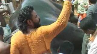 Elephant Faints During Pooram.mpg