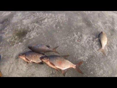 Ловля леща зимой - Яузское водохранилище (закрытие сезона)